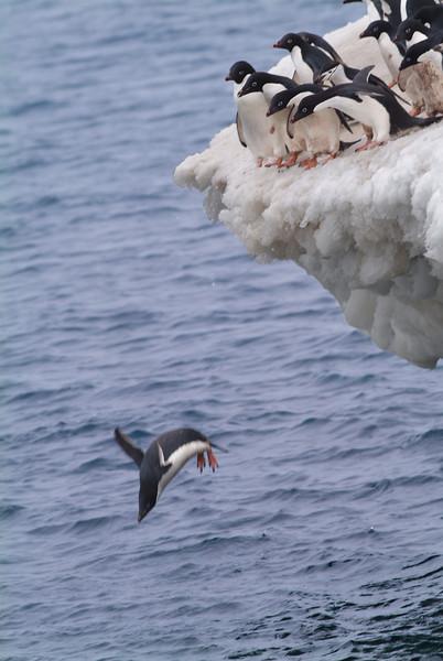 Penguin1718.jpg