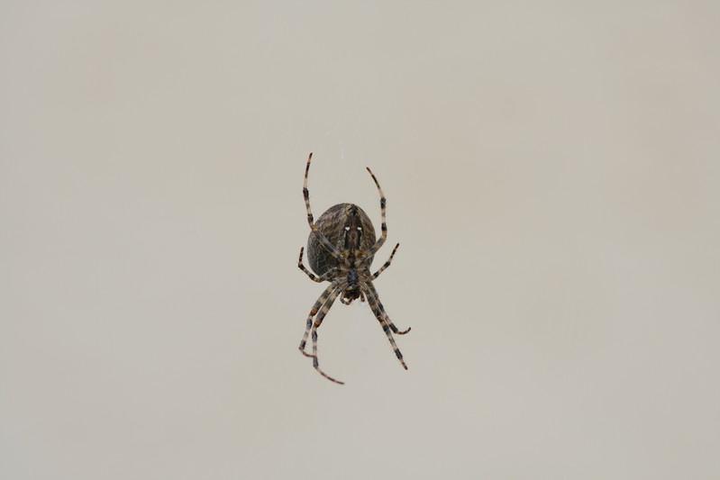 9115 Spider.JPG
