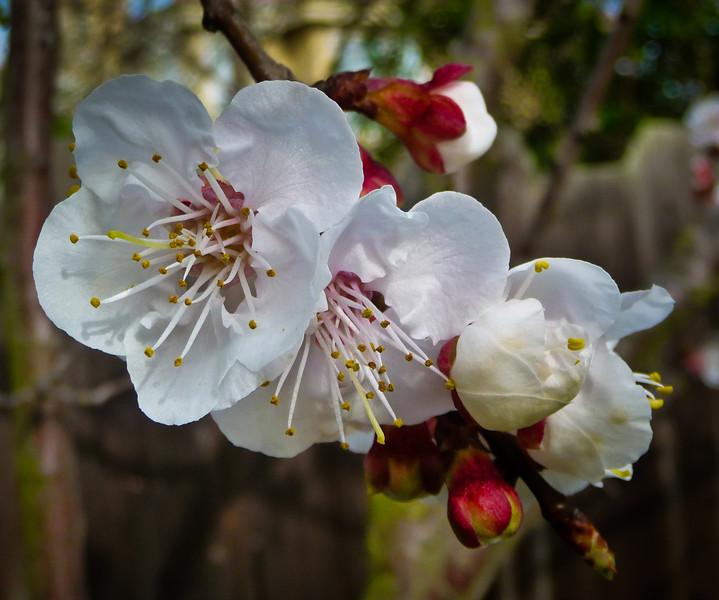 spring flowers-1000753.jpg
