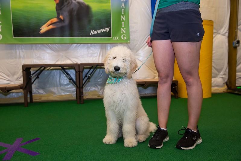 on Command dog Training June 2019-5148.jpg