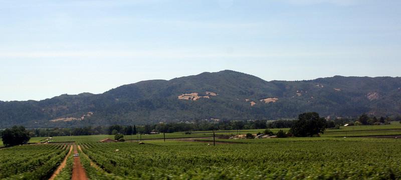 Napa Valley, 30 Jun 2008.