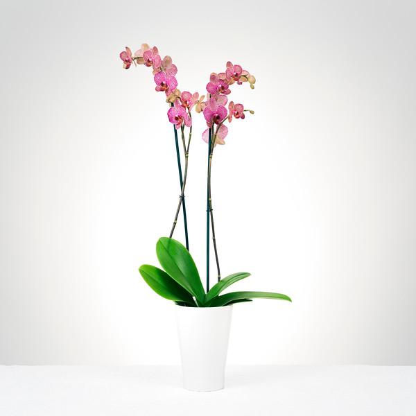 Client - Lux Flowers