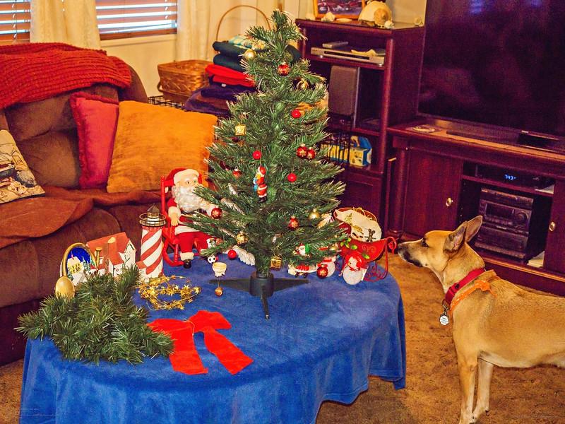 _1050023_  pl5 12x40 christmas take down,tip,paws,mal,mov.jpg