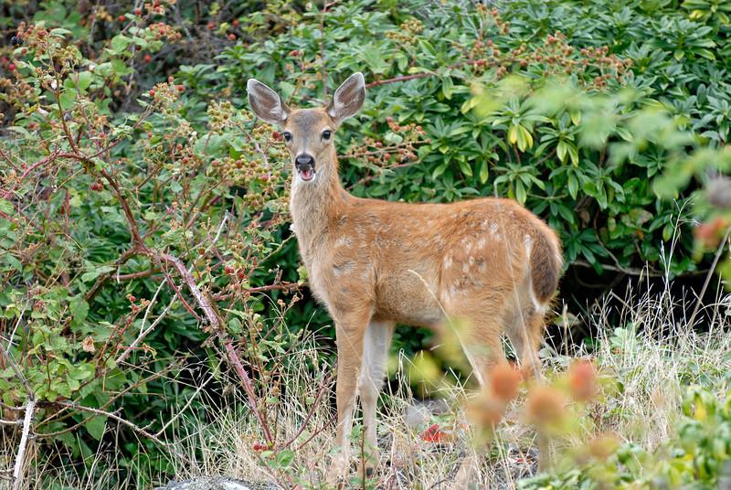 070903 8232 Canada - Victoria - Fort Rodd Hill and Canada geese _F _E ~E ~L.JPG