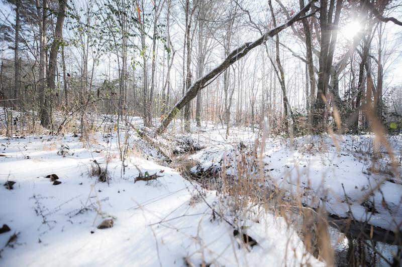 January Snow-32.jpg