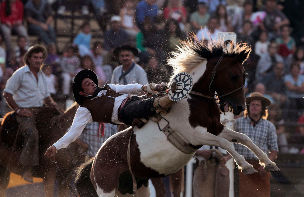 ". A gaucho rides an unbroken horse during the annual celebration of Criolla Week in Montevideo, March 25, 2013. Throughout Easter Week ""gauchos\"", the Latin American equivalent of the North American \""cowboy\"", from all Uruguay and neighboring Argentina and Brazil visit Montevideo to participate in Criolla Week to win the award of best rider. The competition is held March 24 - March 30. REUTERS/Andres Stapff"