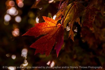 015-leaf_autumn-wdsm-28oct13-5546