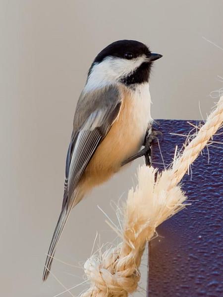 Bird feeder November 2010