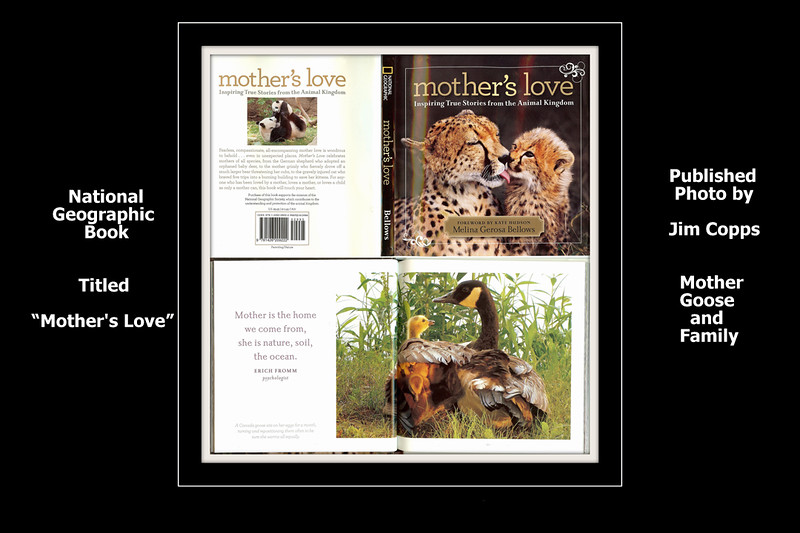 02-Mothers Love Book by Natl Geographic with MG PIC.jpg