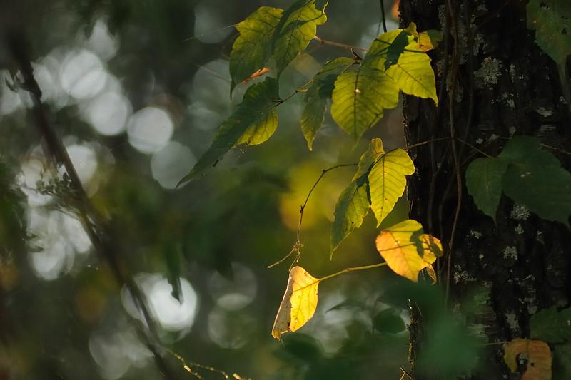 The autumn light is beginning to peak through.
