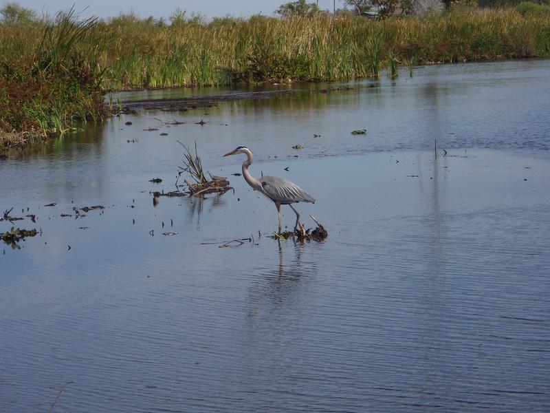 2010 02 20 Everglades 021.jpg
