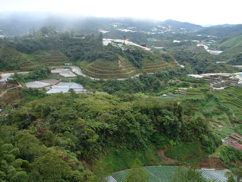 Cultivation in Cameron Highlands (2).JPG