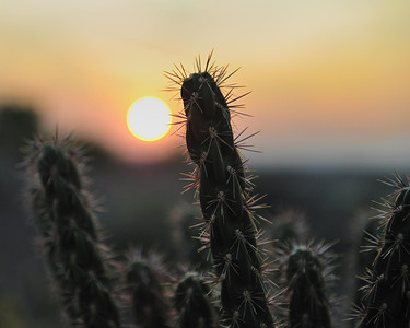 Sunrise in Bloomfield NM