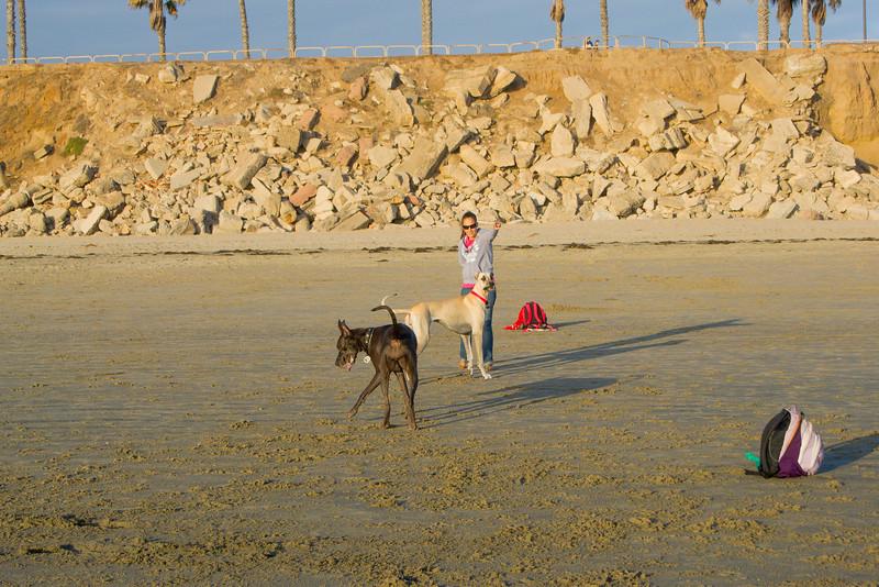 dogs_beach-73.jpg