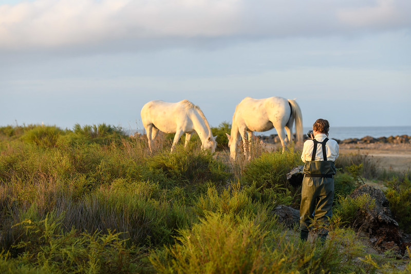 A photographer with the Camargue White Horses.
