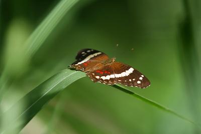 Palenque mariposa 20186.jpg
