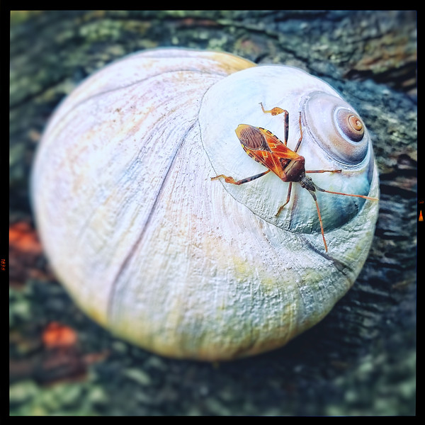 Bug on a Shell