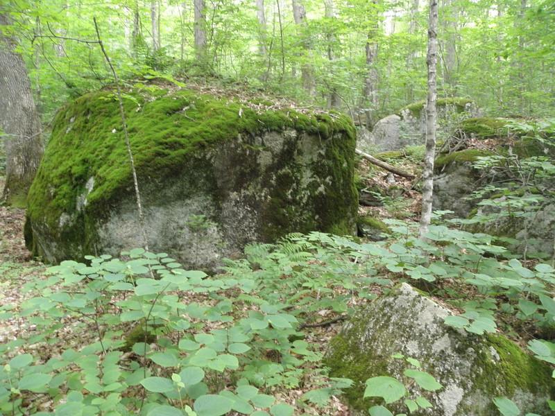 Big mossy boulder.JPG