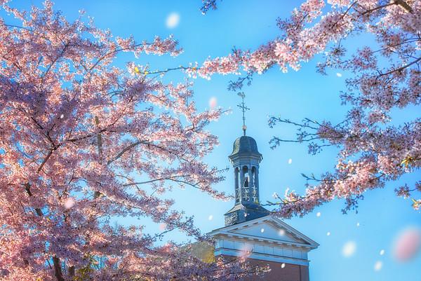 Fine Art architectuur foto van de Sint Lambertus kerk te Nistelrode in de lente met roze en roze kersenbloesem en vallende bloemblaadjes bij de Laarstede
