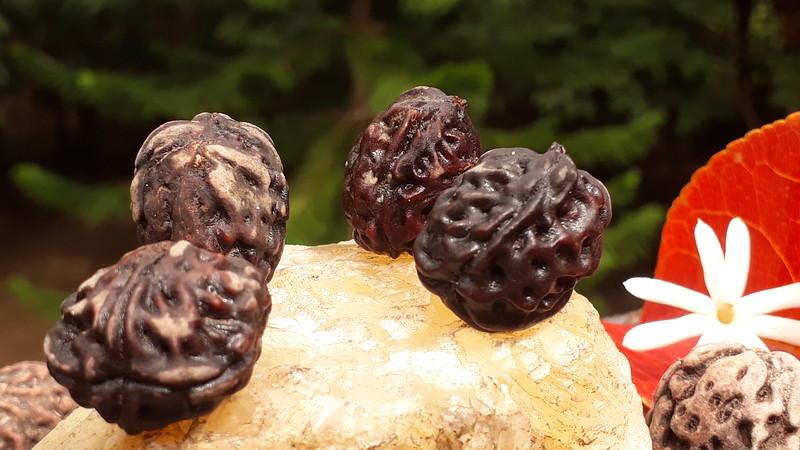 New grove oppo-di-gazolino