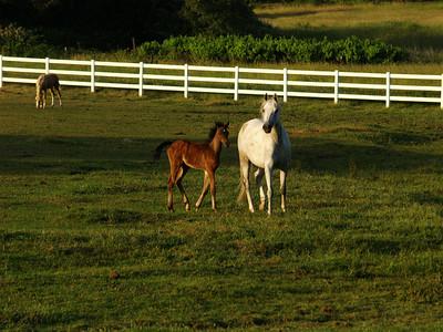 Cool Horses