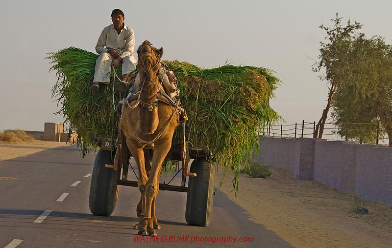 INDIA2010-0206A-384A.jpg