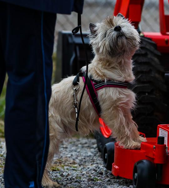 Wheaten Cairn Terrier PP (4 of 4).jpg