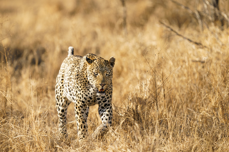 LeopardHills-20181001-3328.jpg