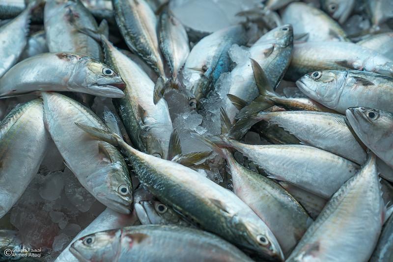 DSC04826- fish market - Muscat.jpg