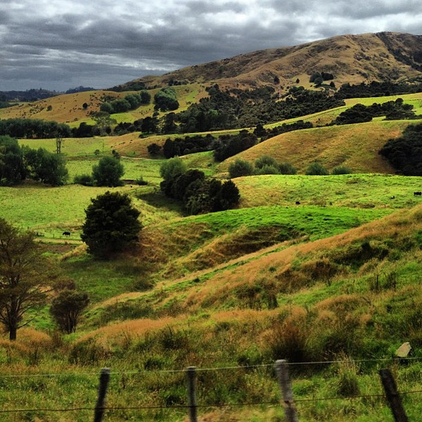 One of those days when North Island, New Zealand looks a bit like Scotland