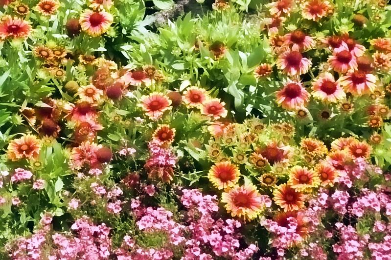 Flower garden painted.jpg