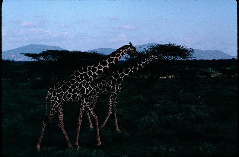 Kenya1_036.jpg