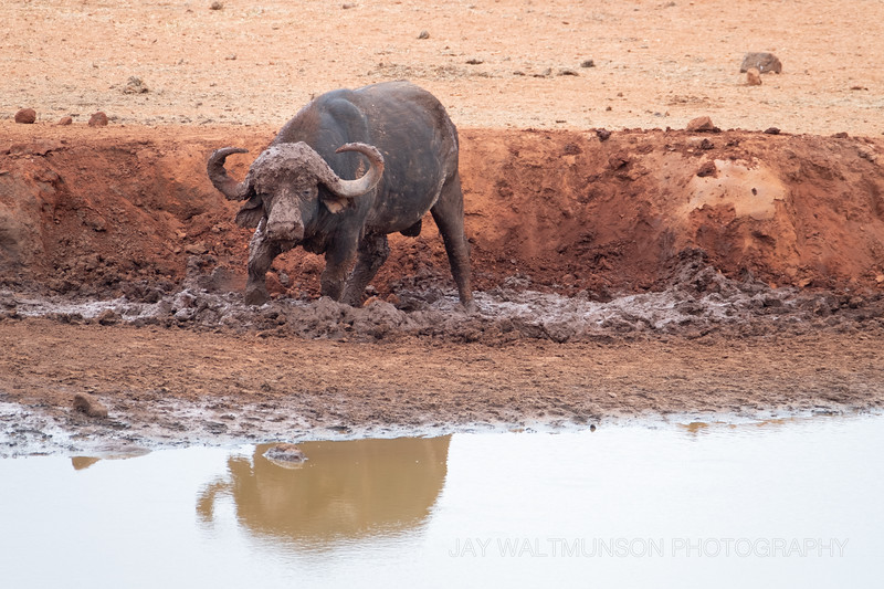 Jay Waltmunson Photography - Kenya 2019 - 176 - (DSCF5170).jpg