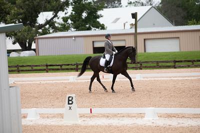 Horse 415