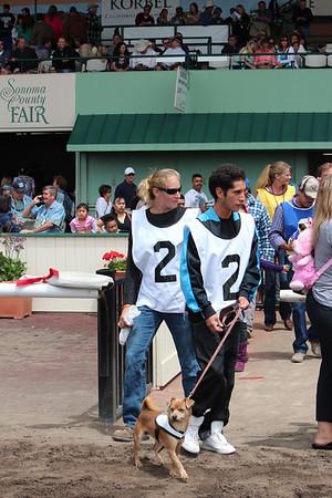 Derby Dog Dash July 31