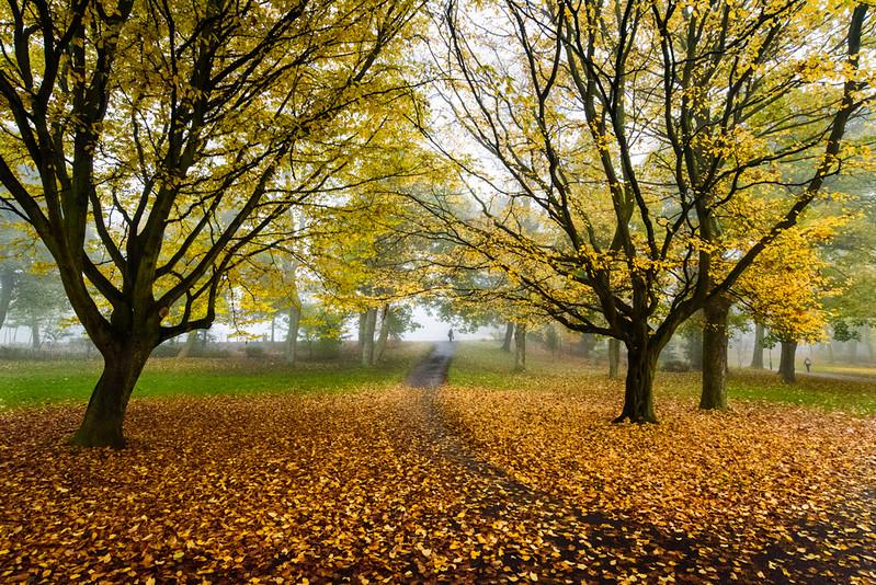 Leazes-autumn.jpg