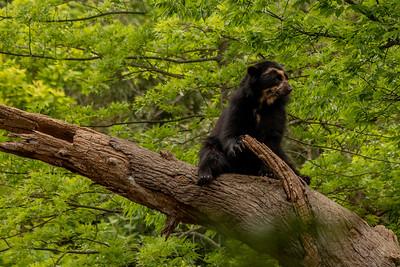 2019-05 Nashville Zoo
