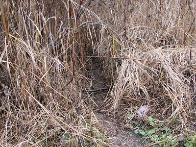 20061118 Raccoon Trail