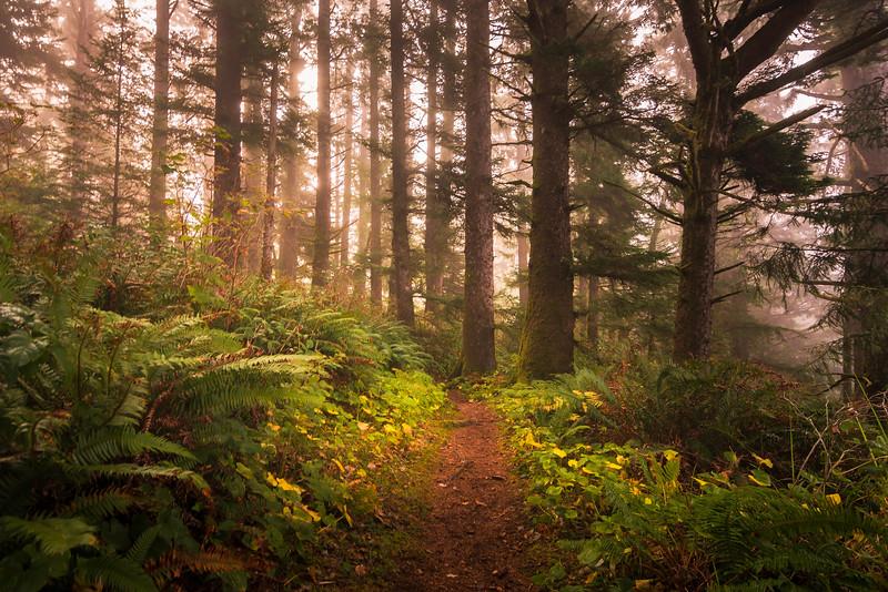 Boardman Forest2.jpg