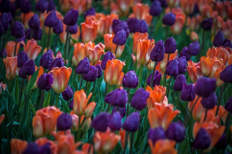 purpleandorange.jpg