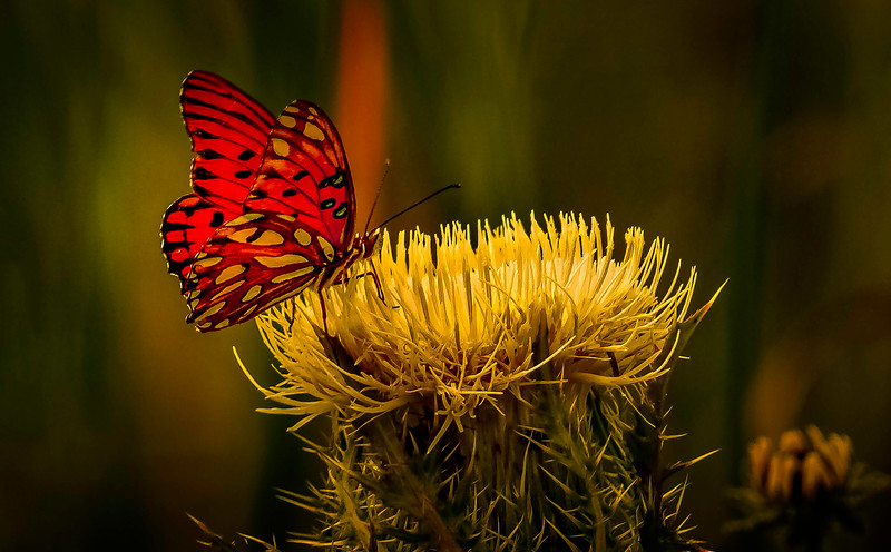 Butterfly-154.jpg