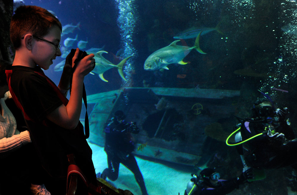 . DENVER, CO. - FEBRUARY 16:  As his sister Brittney Martin,18, who has spina bifida, makes her way under water, Treyton Martin snaps a few photos through the tank glass from the aquarium restaurant. Two teens from the Riley Children\'s Foundation are learning how to scuba dive with instructors from the A-1 Scuba and Travel Aquatics Center at the Downtown Aquarium.(Photo By Kathryn Scott Osler/The Denver Post)