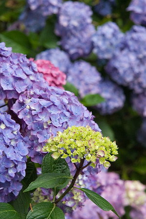 Washington Park Arboretum Flowers
