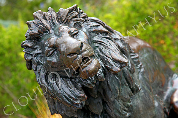 Lion Statuary Pictures