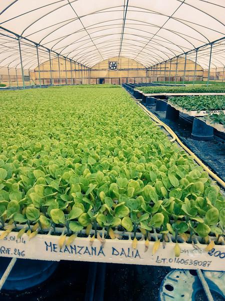 calemone plants 4.jpg
