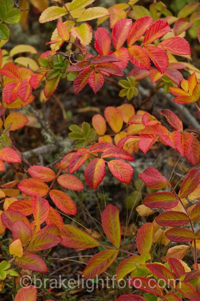 Fall Colours on Cordova Spit
