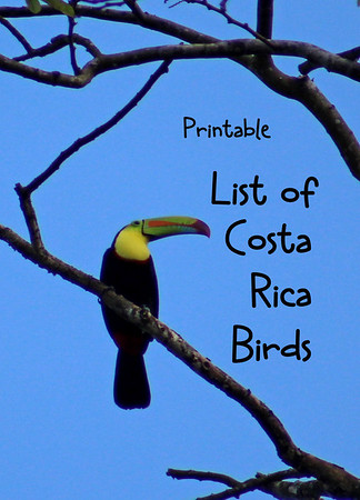 List of Costa Rica Birds Included in this Gallery (264)