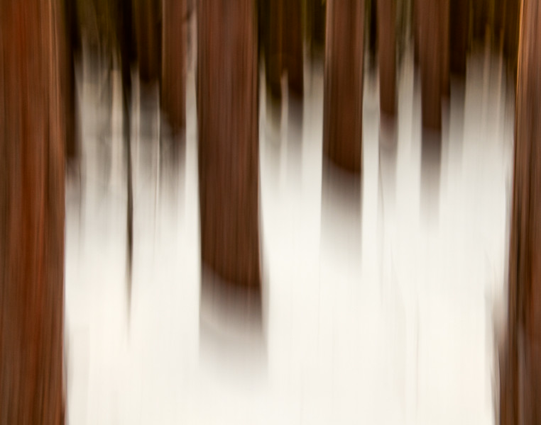 Jackpine forest in winter_Feb 2-2012_01-Edit.jpg