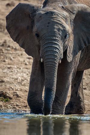 Zuid Afrika/ Madikwe