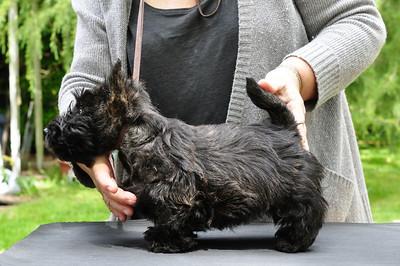 2010 Canada Puppies